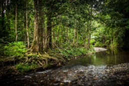 Coopers Creek, Daintree Rainforest - Steve Rutherford Landscape Photography Art Gallery
