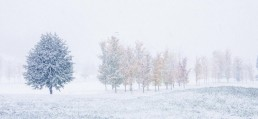 Whiteout, Millbrook, NZ - Steve Rutherford Landscape Photography Art Gallery