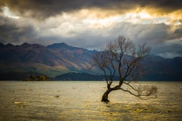 Muse, Wanaka, NZ - Steve Rutherford Landscape Photography Art Gallery