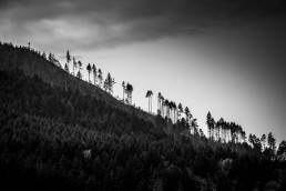 Contenders, Roslyn, Washington - Steve Rutherford Landscape Photography Art Gallery